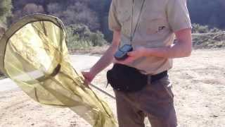 Collecting the Sonoran Blue Butterfly