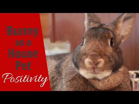 What It's Like Having a Bunny As a House Pet