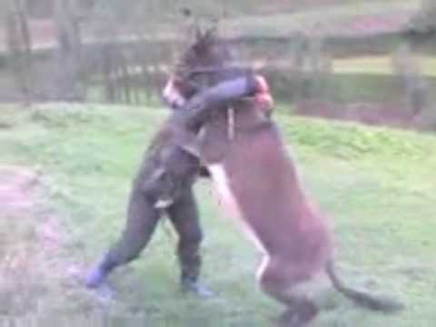 njeri vs magari