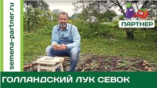гОЛОВА САДОВАЯ С ТЕТЕЙ ТАНЕЙ НОВИНКИ 2017 БЕСПЛАТНО