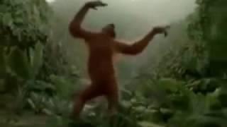 Обезьяна танцует под