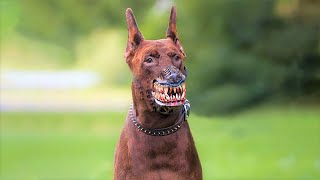 10 Most Illegal Dog Breeds in the World