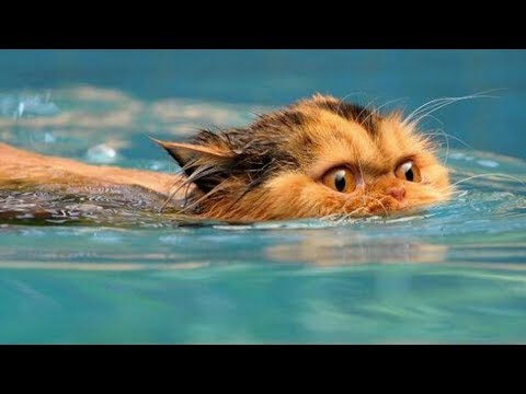 Funny Cats in Water Compilation 2017
