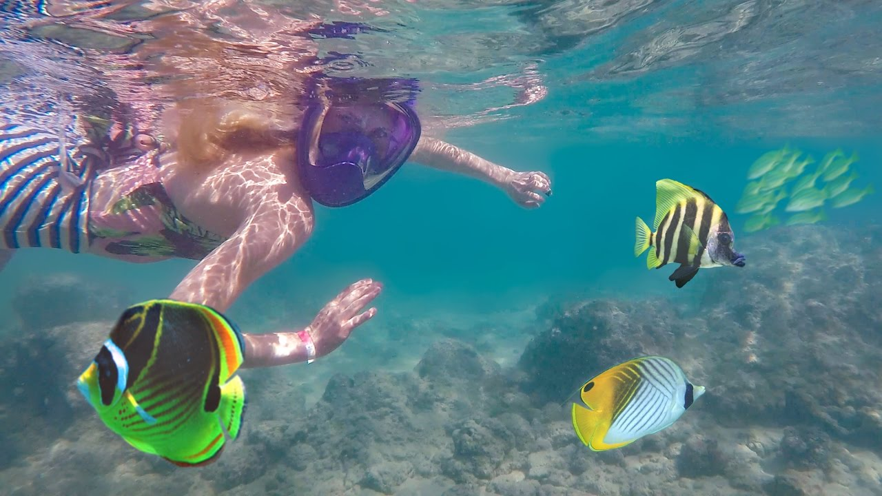 Swimming with tropical fish in hawaii youtube for Fish swimming backwards