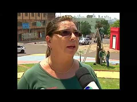 Capital Das Araras: Campo Grande é Ideal Para As Aves #arquivoDE