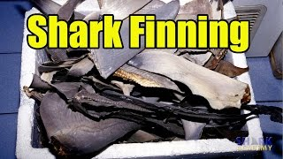 Shark Academy: Shark Finning.