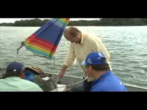 Pesca de Dourado no Rio Paraná  | Condomínio Porto Rico Resort Residence