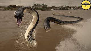 The 5 Most Horrifying Snakes That Could Exist in Real Life.