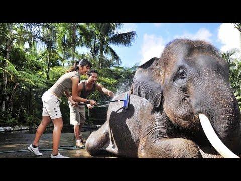 Hotel with Elephants in Bali, Elephant Safari Park Lodge, Gianyar, Bali, Indonesia, 5 stars hotel