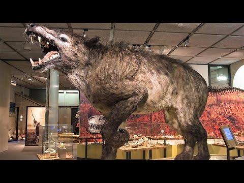 13 LARGEST Land Mammals Ever