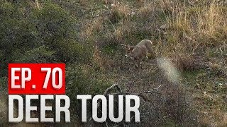 We Found a BIG BUCK!  Day 2 - Arizona Public Land Bowhunt - DEER TOUR E70