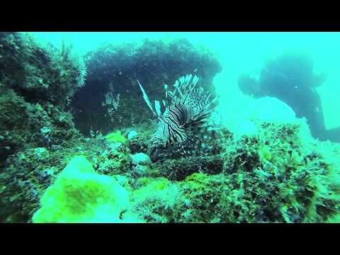Lobster Diving Vero Beach Fl