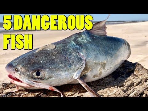 Top 5 Dangerous Fish To Unhook