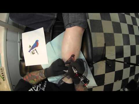 Bird Tattoo Time Lapse! HD