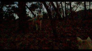 어두워질 무렵 산책 중에 대형견을 만났습니다. 근처 농장에 있는 것을 ...