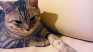 Коту хотят оторвать усы очень смешно смотрите до конца😅😅😅😅😅😅