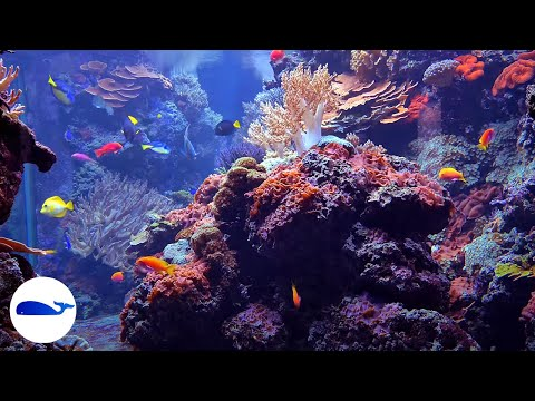 4K CORAL REEF AQUARIUM | NO MUSIC 8 HOURS | RELAXING 🐠FISH 4K