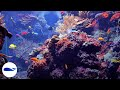 FISHING FOR GIANT REDS Illegal Aquarium Coral Trade?? - Ep ...