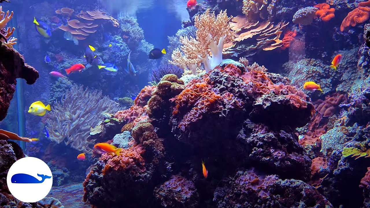 Coral Reef Aquarium No Music 8 Hours Relaxing Fish Tank Relaxtime Youtube