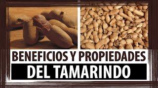 PARA QUE SIRVE EL TAMARINDO | BENEFICIOS Y PROPIEDADES DEL TAMARINDO