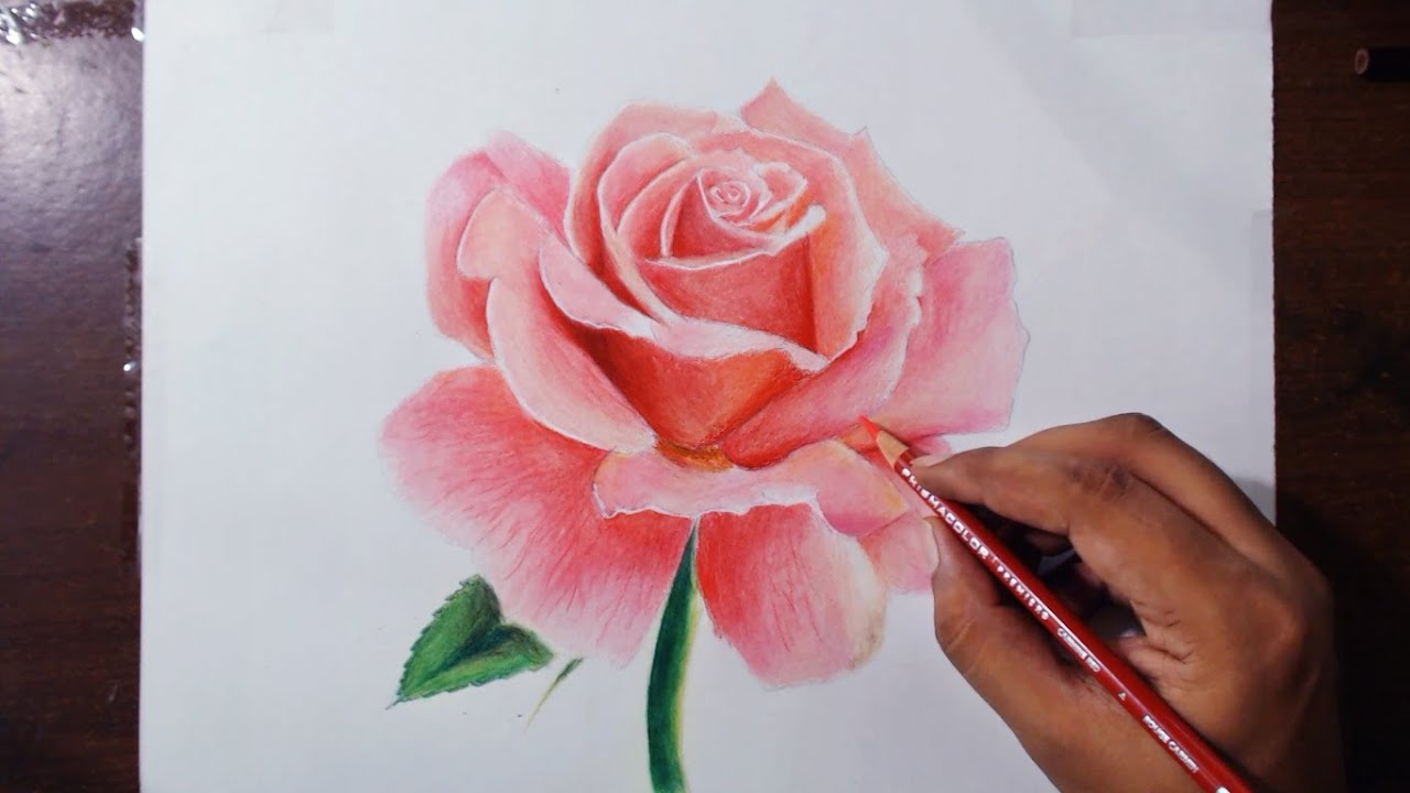 Drawing A Rose Flower Drawing Series 1 Prismacolor Pencils Youtube