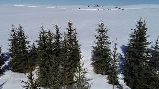 Blue Spruce (North 40 Field)-Part 2
