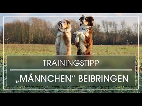 Trick: Hund lernt Männchen / Hund Männchen beibringen