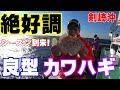 【剣崎沖】カワハギ釣り 一義丸 の動画、YouTube動画。