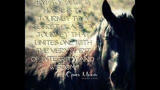 Wild Horses, Spirit of the Wind