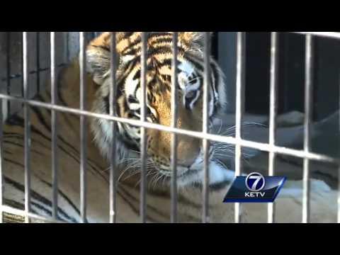 Woman sneaks into Henry Doorly Zoo, is bitten by tiger