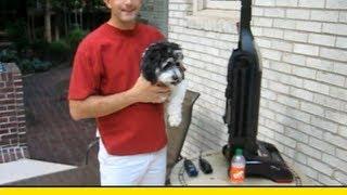 How To Vacuum Trim Your Dog (HowToLou.com)