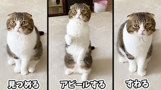 🐈うちの猫のおやつのねだり方がこちらですw #shorts