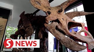 Triceratops skeleton expected to fetch $1.75 million