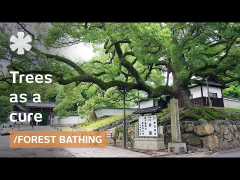 "Science of ""forest bathing"": fewer maladies, more well-being?"