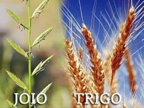 17/07/ - 16º DOMINGO do Tempo Comum - .TempoComDeusm.br