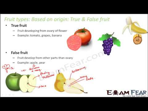 Biology Morphology of Flowering Plants part 30 edible parts of fruits CBSE class 11 XI