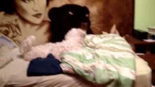Kot bawi się z psem