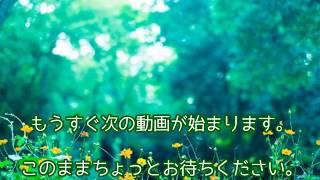 ナサケの女 ~国税局査察官まとめ