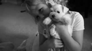 Kid Friendly Toy & Teacup Schnauzer Puppies!