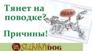 пес тянет поводок   причины  Собака сильно тянет на прогулке   почему