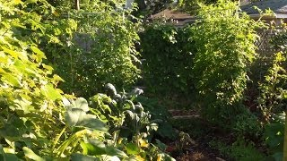 Creating a Small Suburban Perennial Food Forest - part 1