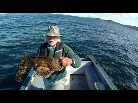 Cabezon, Lingcod, North Reef, Newport, Oregon...