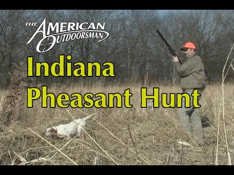 Indiana Pheasant Hunting