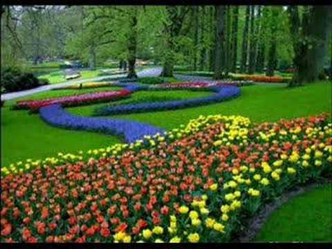 Resultado de imagem para imagem de jardim florido