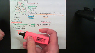The Parathyroid Glands and Vitamin D Part 7