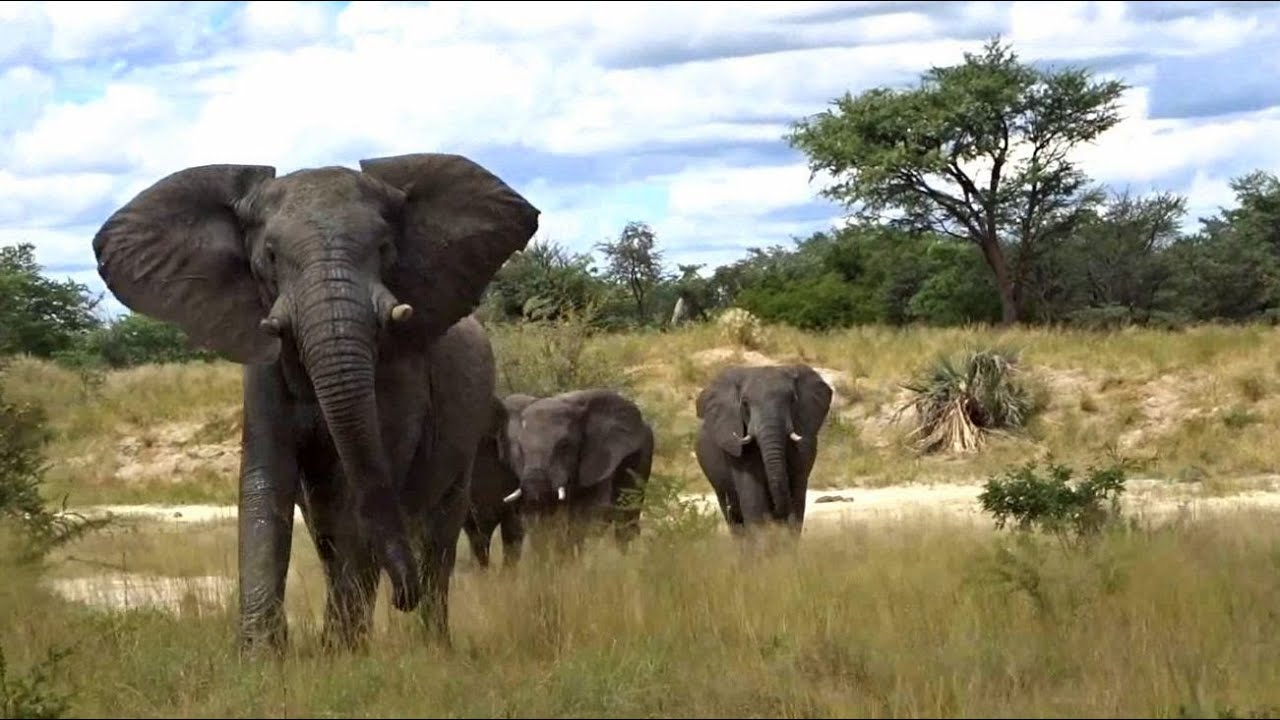 How Moses Saves Elephants from Human Wildlife Conflicts in Tanzania with Bees