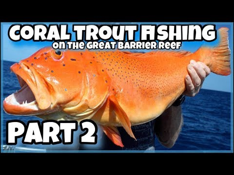 Coral Trout Fishing On The Great Barrier Reef. PART 2