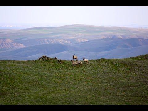 California Hunting Ranch | RK Ranch, Merced County California