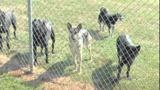 Alpha Dog Training Center