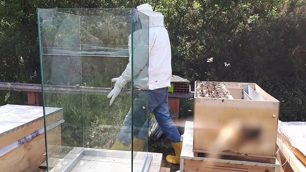 Camdan Arı Kovanı Yaptık 1kısım Imalatı Ve Arıyı Yerleştirme